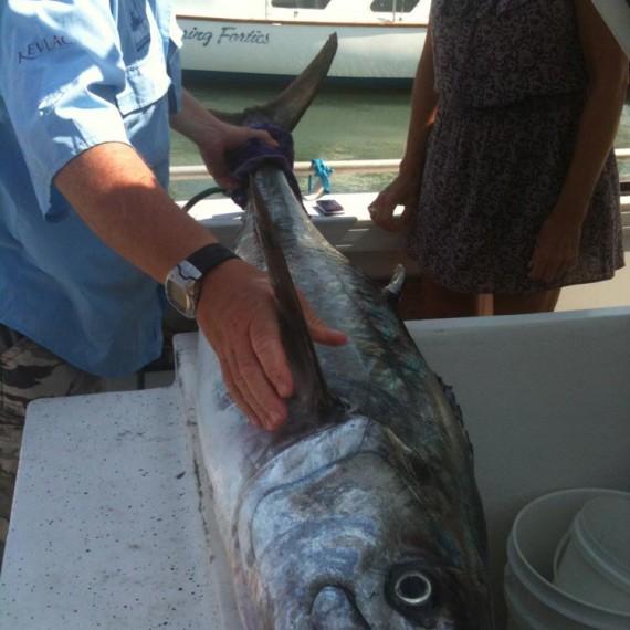 Fishing Charters Mooloolaba